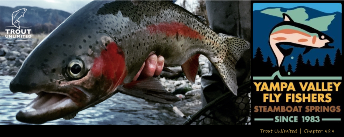 Yampa Valley Fly Fishers